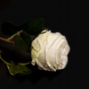 Роза 92929