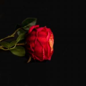 Роза 92927
