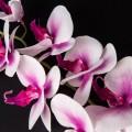 Орхідея силіконова 92902
