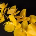 Орхідея силіконова 92901