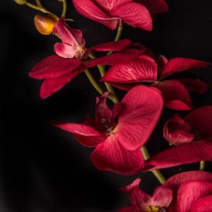 Орхідея тканинна 92900