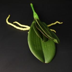 Листя для орхідеї 92723